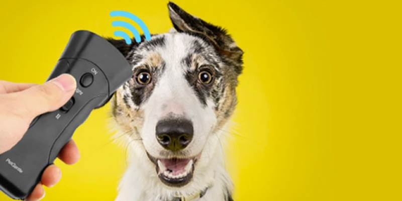 The Evolving Technology and Products for Pet