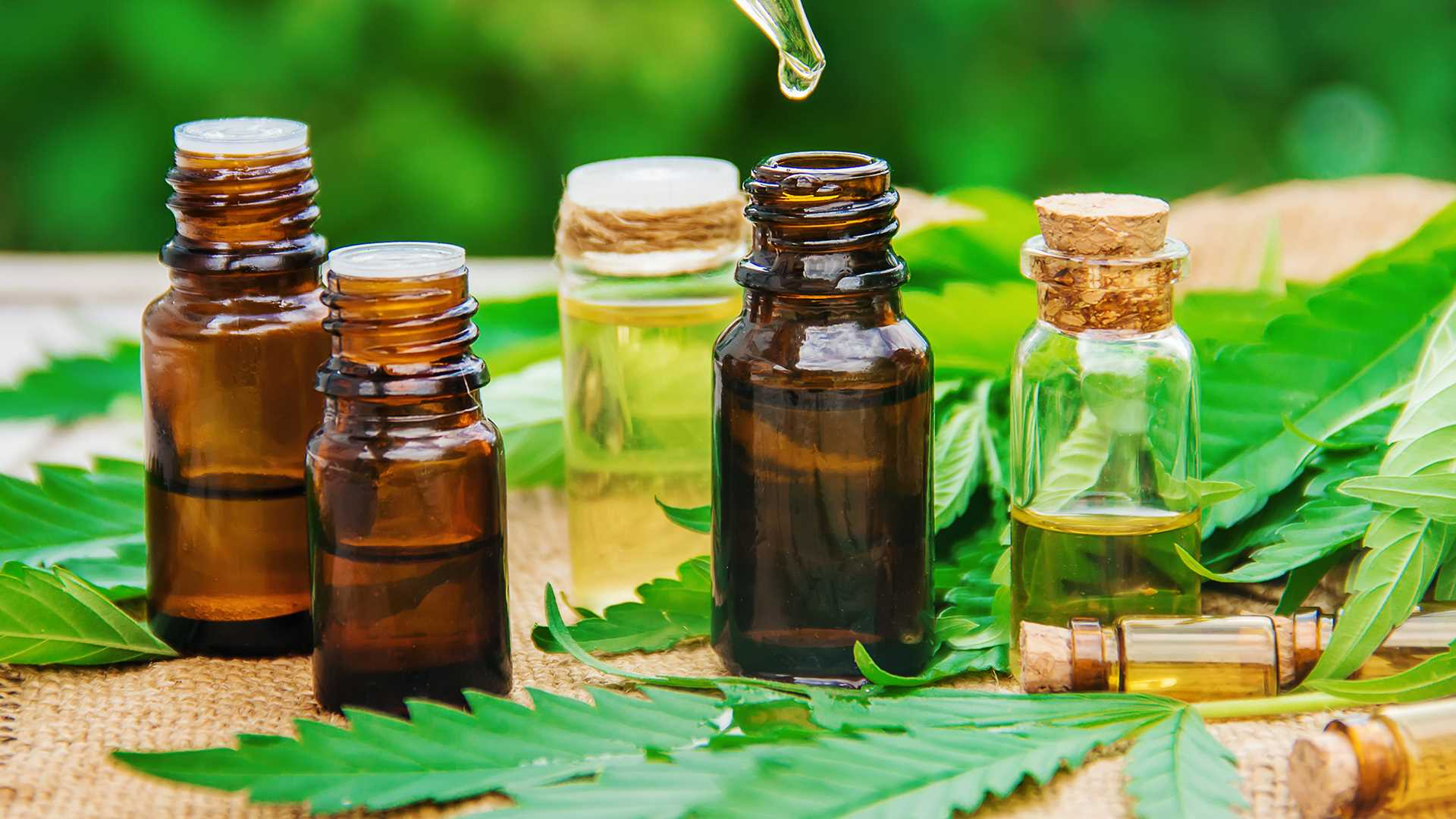 Everything You Need To Know About Cbd Oil Drops