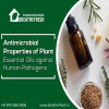 Antimicrobial Properties of Plant Essential Oils against Human Pathogens