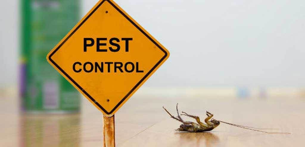 Pest Control Advice from Qualified Pest Experts