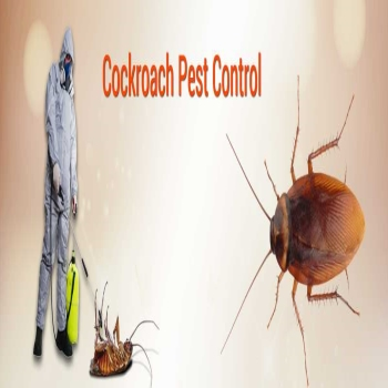 Control Cockroaches with DIY or Professional Pest Control Methods
