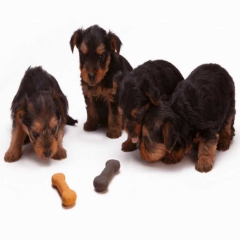 How to Choose the best Dog Food? (Save the Furies)
