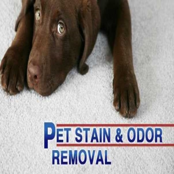 Pet Odor and Stain Removal from Carpets