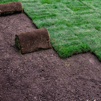 10 Reasons that You Ought To Look for Sod Near Me