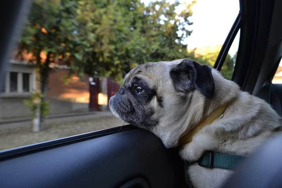 Why not go on a trip with a pet? Features of road trip with a dog