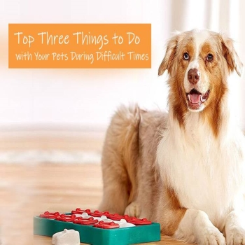 Best Three Things to Do with Your Pets During Difficult Times