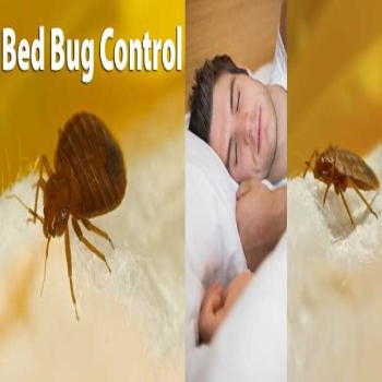 Bed Bug Treatment Preparation Tips by Professionals