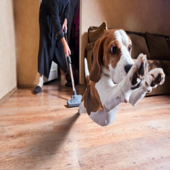 How to choose the Best Cordless Vacuum for Pet