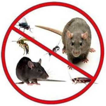 Rodent Problems Some Reasons How Dangerous They Can Be
