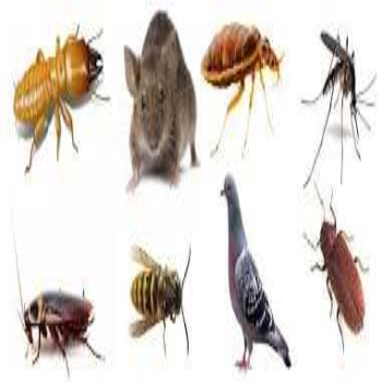 Pest Control: Professional Vs. Do-It-Yourself (DIY)