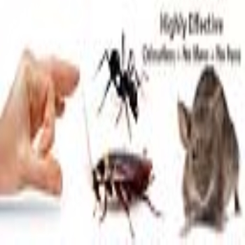 Do It Yourself Pest Control - It's Easy, Cheap and Effective
