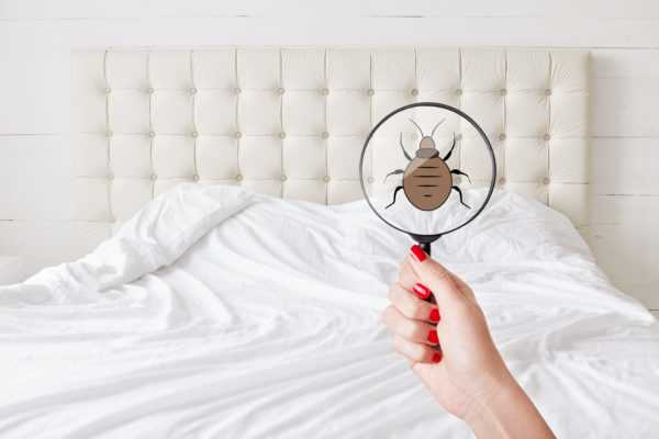 Pest control services you can rely on in Toronto